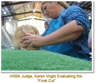 Judging at the 2016 ARBA National Convention - Del Mar, CA